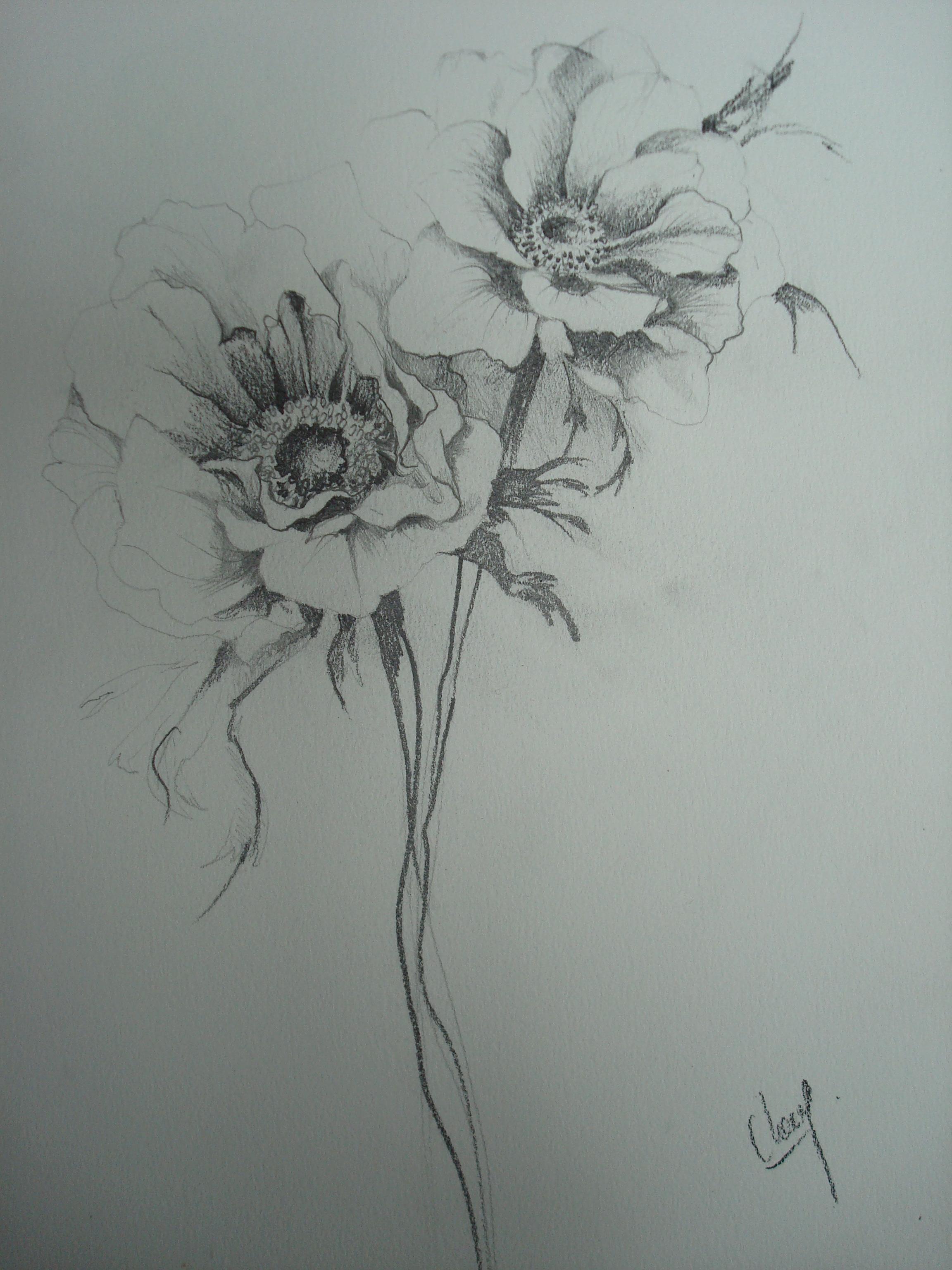 Anemones Clang Artiste Peintre