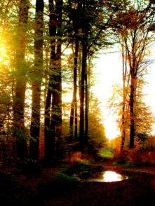 Forêt de Pierrefonds
