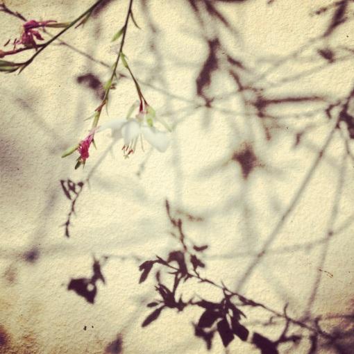 Fleur et ombre