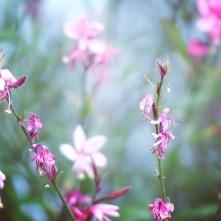 Fleurs d'été.