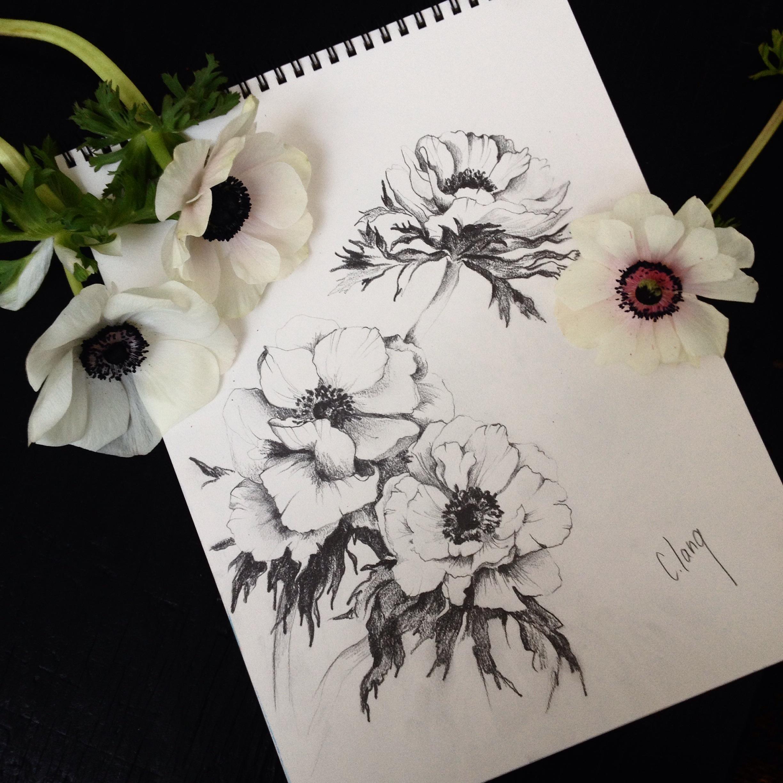 Anemone Clang Artiste Peintre